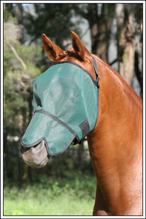 Australian Made Flyveil with Nose Cover