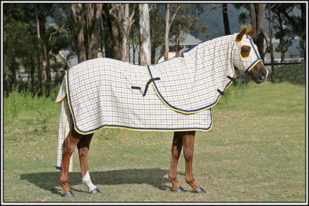 COTTON Collar Check Rug Only